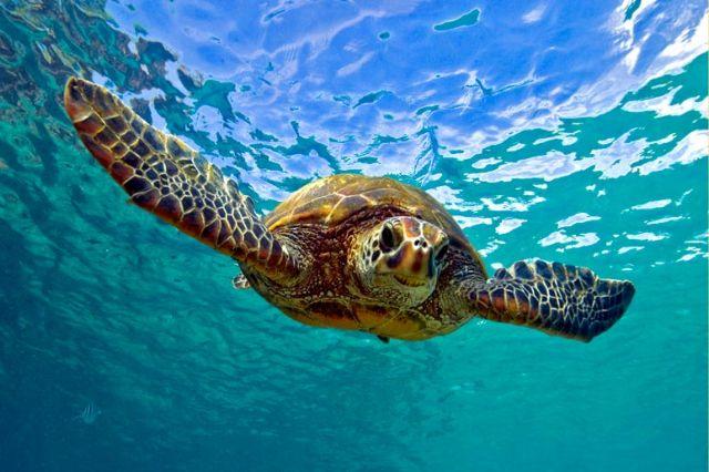 Τεράστια νεκρή χελώνα βρέθηκε στη Σαλαμίνα