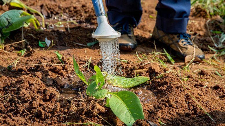 Με επιτυχία ολοκληρώθηκε η δωρεάν διάθεση παραδοσιακών φυτών στο Πέραμα