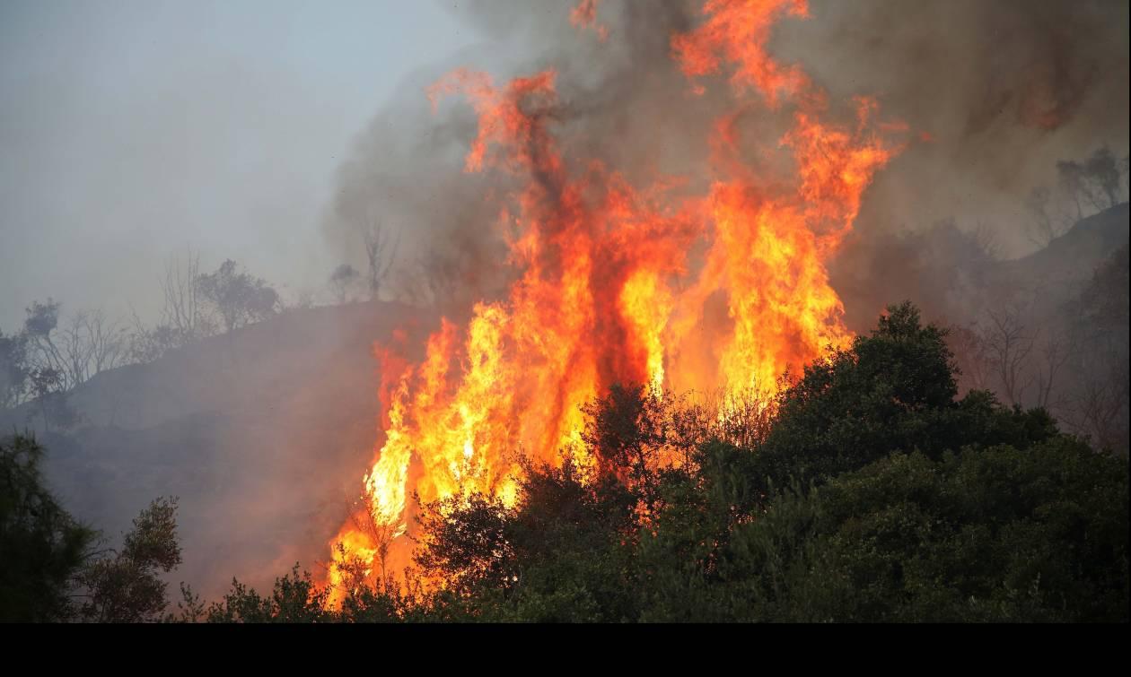 Πυρκαγιά σε δασική έκταση στην Ανατολική Μάνη!
