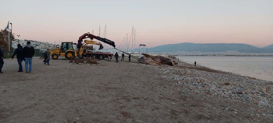 Πειραιάς: Νεκρή φάλαινα ξεβράστηκε στη Φρεαττύδα