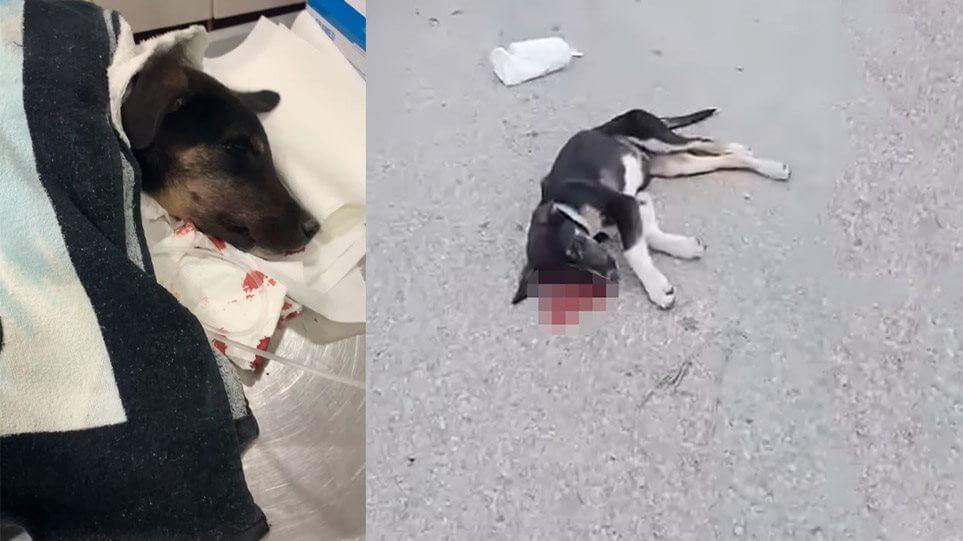 Ψάθα Βιλίων : Μανιακός σκοτώνει αδέσποτα -  Εικόνες που σοκάρουν