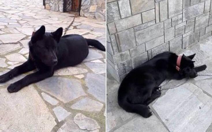 ΦΡΙΚΗ : Βίασαν σκύλο στην  Πιερία