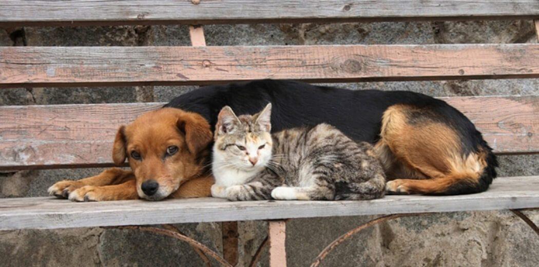 Αγία Βαρβάρα: Πρόγραμμα προστασίας αδέσποτων ζώων συντροφιάς