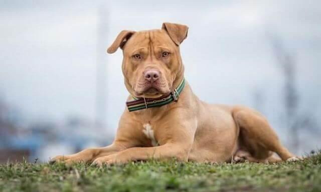Σοκ στην Πετρούπολη: Κουκουλοφόρος σκότωσε σκύλο με βέλος