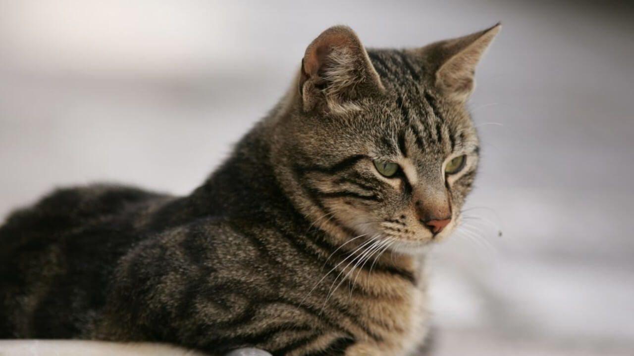 Χαλκίδα : Συνελήφθη 67χρονος - κατηγορείται για θανάτωση γάτας