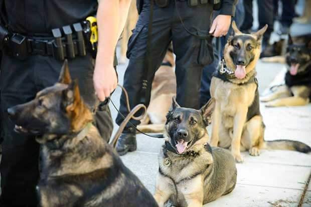 Μύκονος: Τραυματίστηκε από επίθεση σκύλων, υπέβαλε μήνυση και την συνέλαβαν!