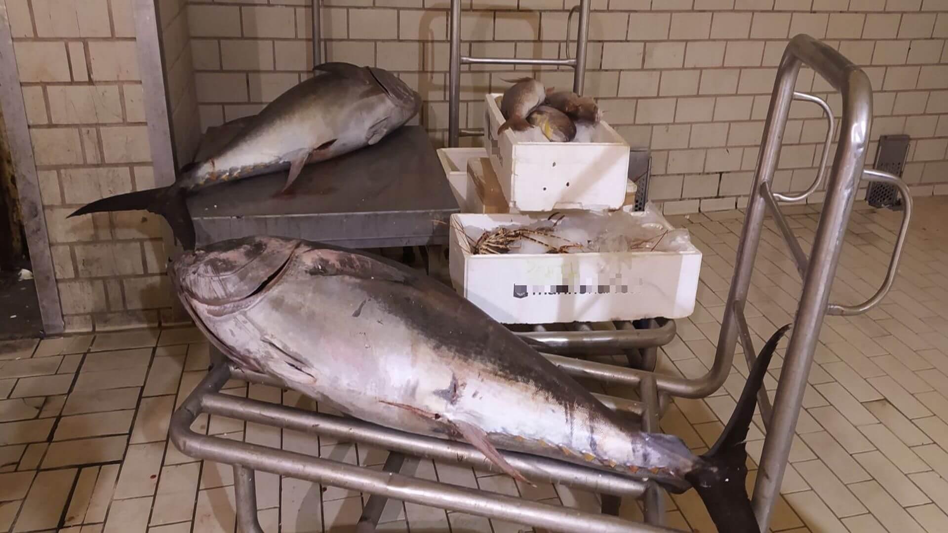 Έλεγχος στην Ιχθυόσκαλα της Χαλκίδας - Εντοπίστηκαν ακατάλληλα αλιεύματα