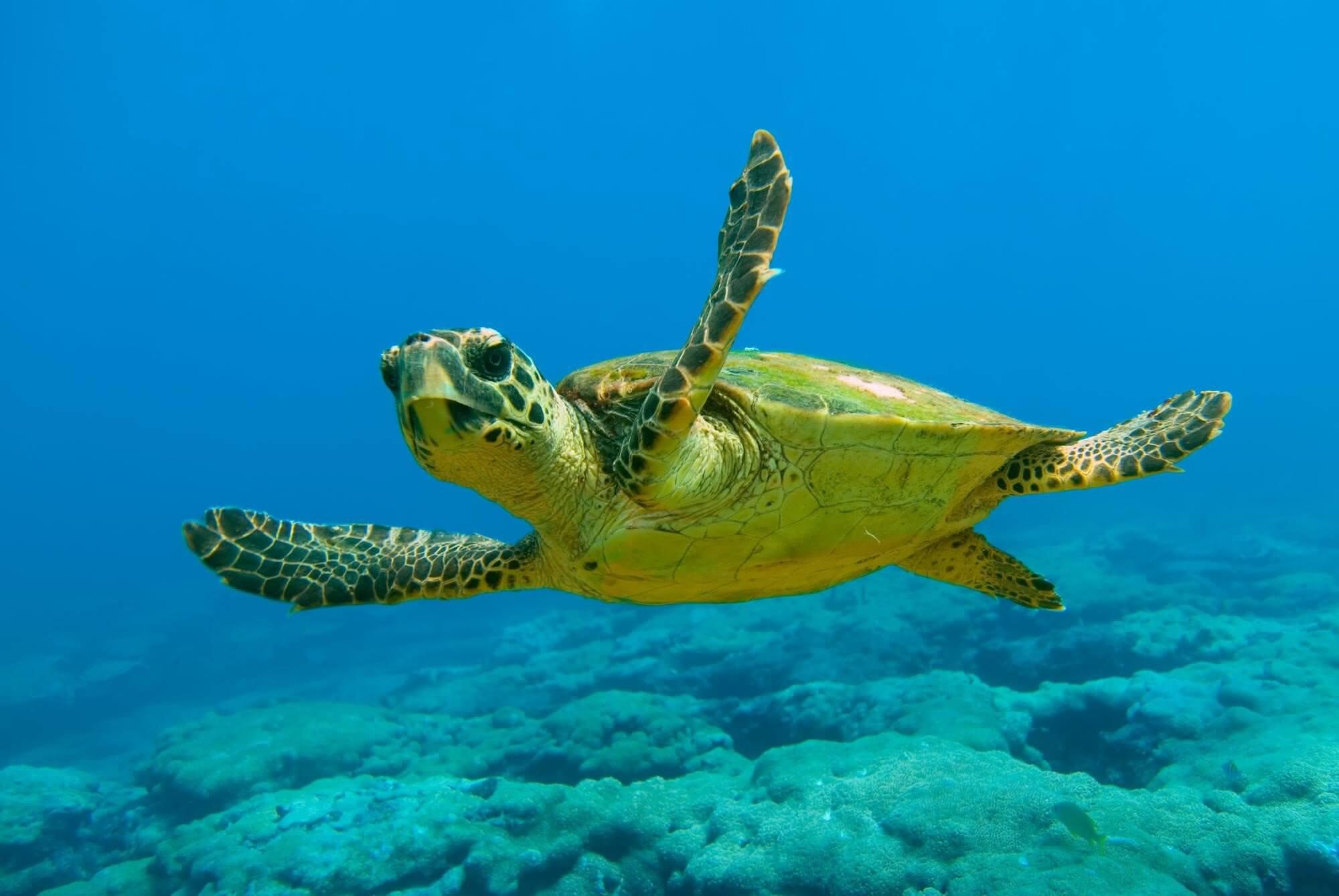 Εντοπισμός τραυματισμένης θαλάσσιας χελώνας στο Κερατσίνι