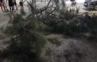 Κερατσίνι: Δέντρο έπεσε στο κεφάλι γυναίκας - Νοσηλεύεται στο Αττικόν
